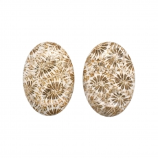 Fossil Coral Cab Oval 26x18mm Matching Pair 40 Carat