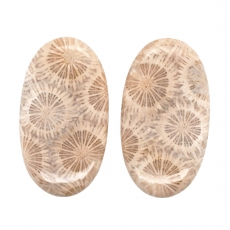 Fossil Coral Cab Oval 38x21mm Matching Pair 68.30 Carat