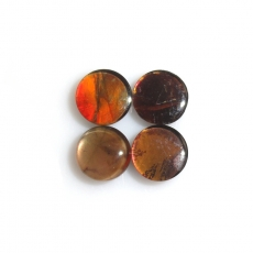 Fossilized Ammolite Cabs Round 6mm Approximately 3 Carat